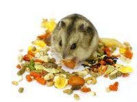 В домашних условиях хомячков можно кормить готовой кормовой смесью, которую можно приобрести в зоомагазине.
