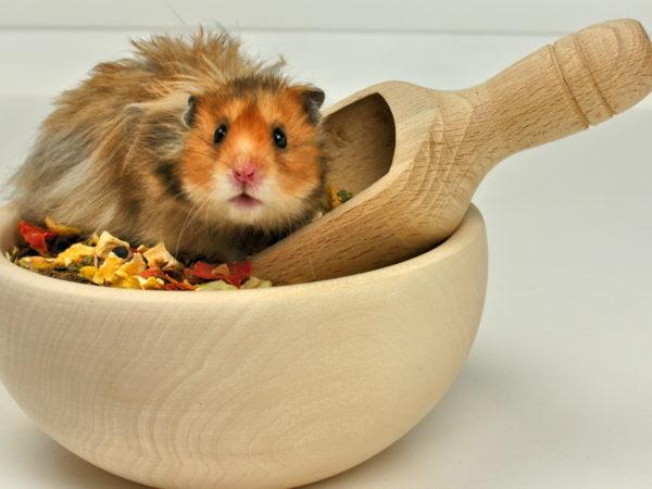 Питание маленьких грызунов